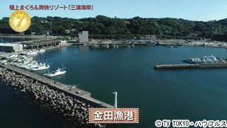 金田漁港 2018年8月11日 出没...