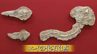 エイの化石3点