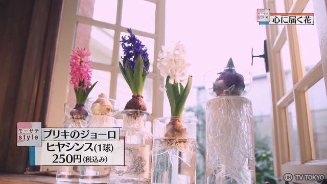 【モーサテStyle】心に届く花「ヒヤシンス」