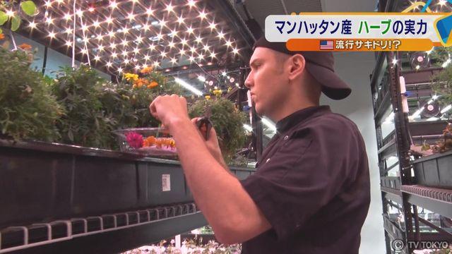 【米 流行サキドリ!?】「ハーブ工場」