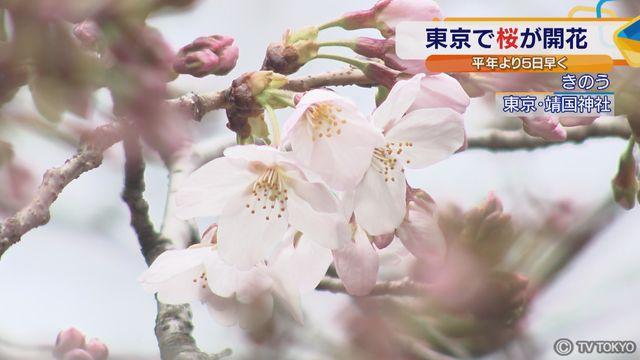 東京で桜が開花 平年より5日早く