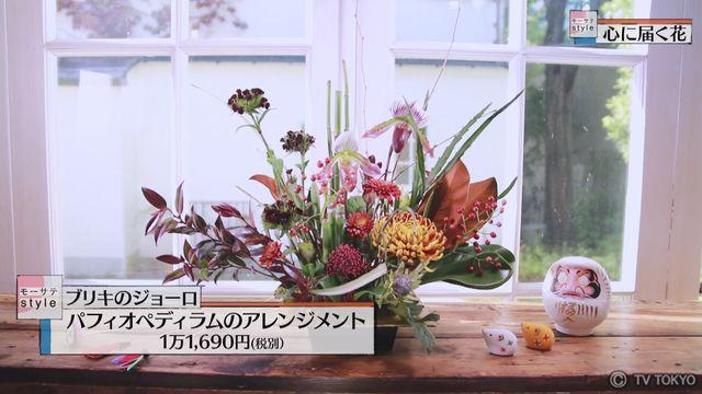 【モーサテStyle】心に届く花「パフィオペディラム」