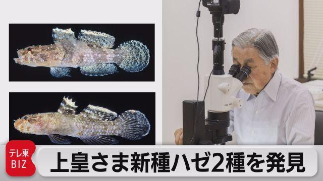 上皇さま 新種のハゼ2種を発見