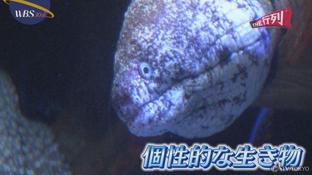 【THE行列】目玉のない水族館