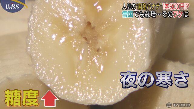 日本列島北から南まで 国産バナナ栽培に熱視線