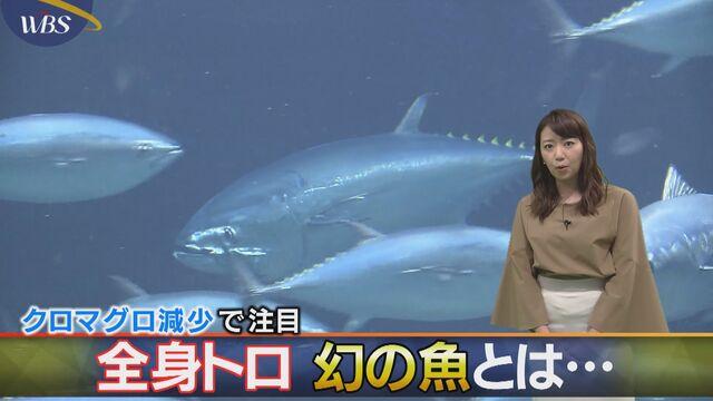 クロマグロ減少で注目 全身トロ 幻の魚とは…
