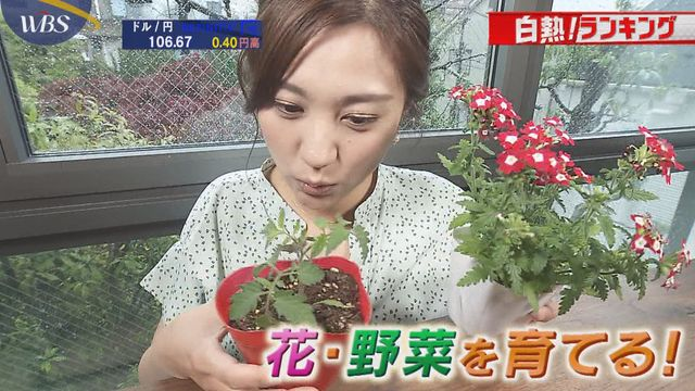 【白熱!ランキング】家で育てる野菜の種