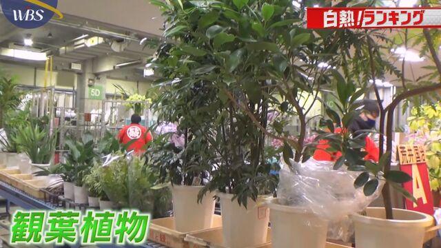 【白熱!ランキング】 「観葉植物」